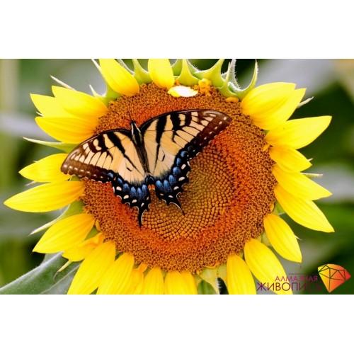"""Картина стразами """"Бабочка на подсолнухе"""""""